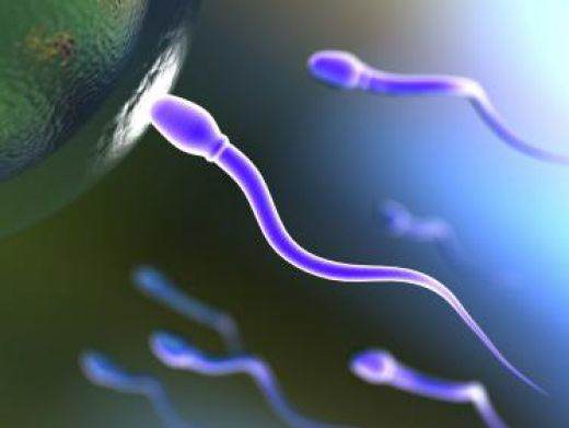 Sperm Donor rights