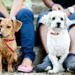 custody agreements and pets