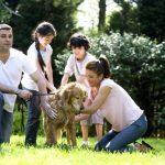 family pet, divorce and pets, divorce attorney san diego, men's legal center